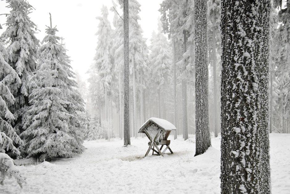 Wildfütterung_Wald-940x628